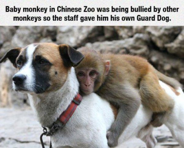13.) Bullying also exists in the animal world.