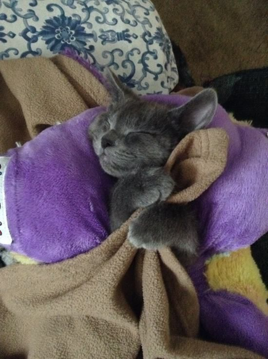 This Cuddly Cat.