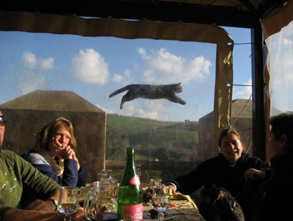 14) This cat photobomb...or maybe it's a giant cat roaming the hills.