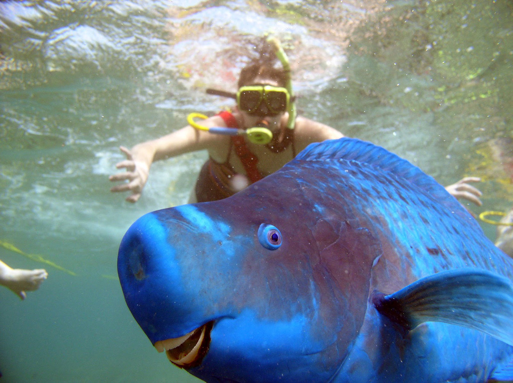 23) Parrot Fish photobombs a woman snorkeling...or did she photobomb the fish's selfie?