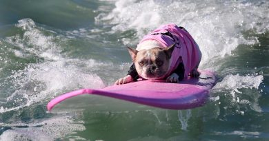 amazing surfing dogs