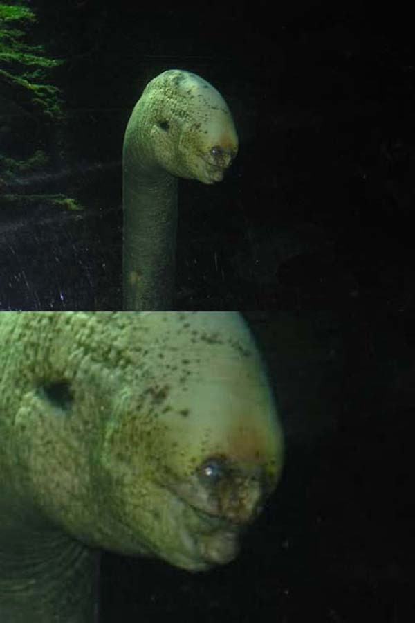 2.) This is an eel. You'll see him in your dreams later.