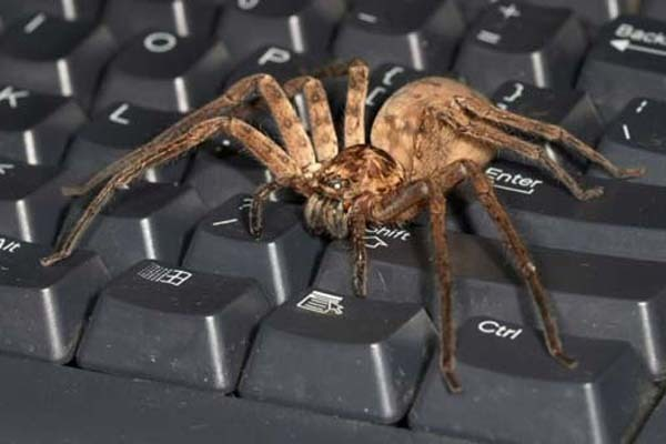 7.) Mr. Spider wants to use the computer, too.