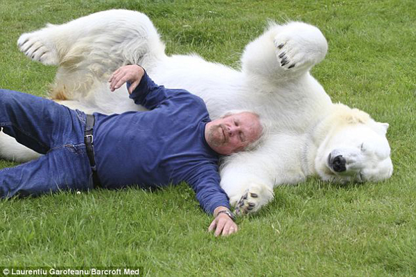 Honestly, Mark is the only man in the world who can touch a polar bear in this way.
