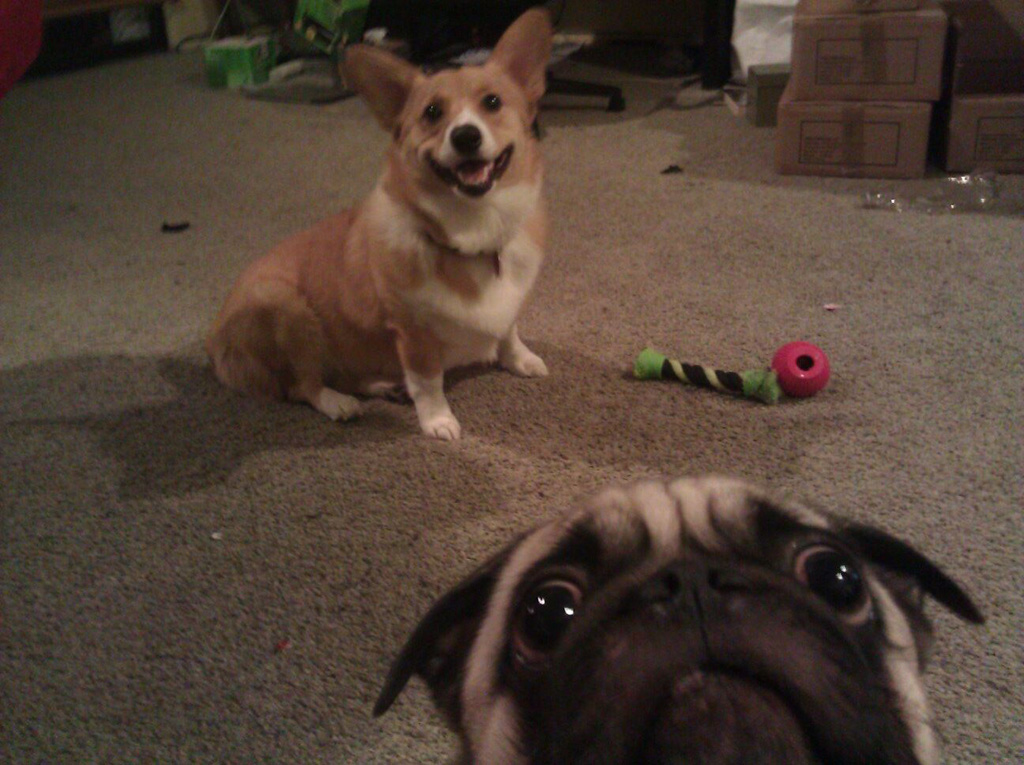10) Photobomb level: highly concerned.