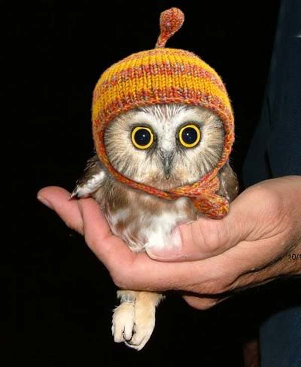 24.) All owls should wear hats. That's a scientific fact.