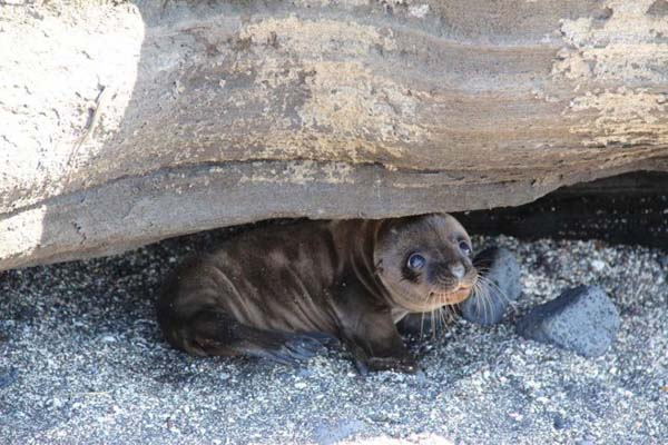 22.) It's safe to come out now, little seal.