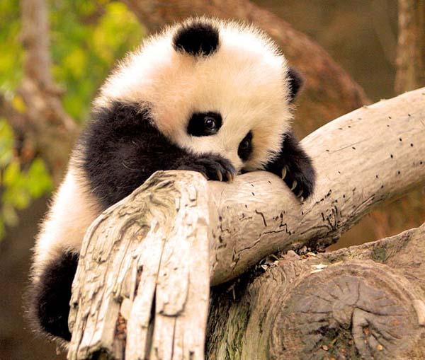 2.) Don't be shy, panda. I love you.